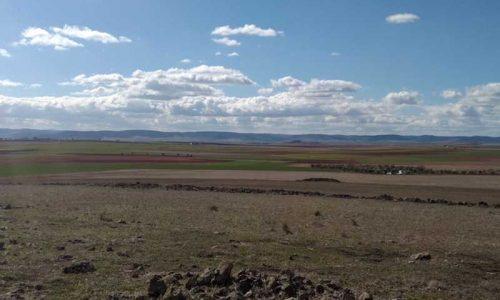 La ONC pone en marcha un proyecto de recuperación de la perdiz roja