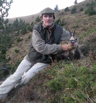 cazar-sarrio-del-bosque-sarrio-oro