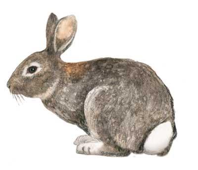 conejos-cercados-pablo