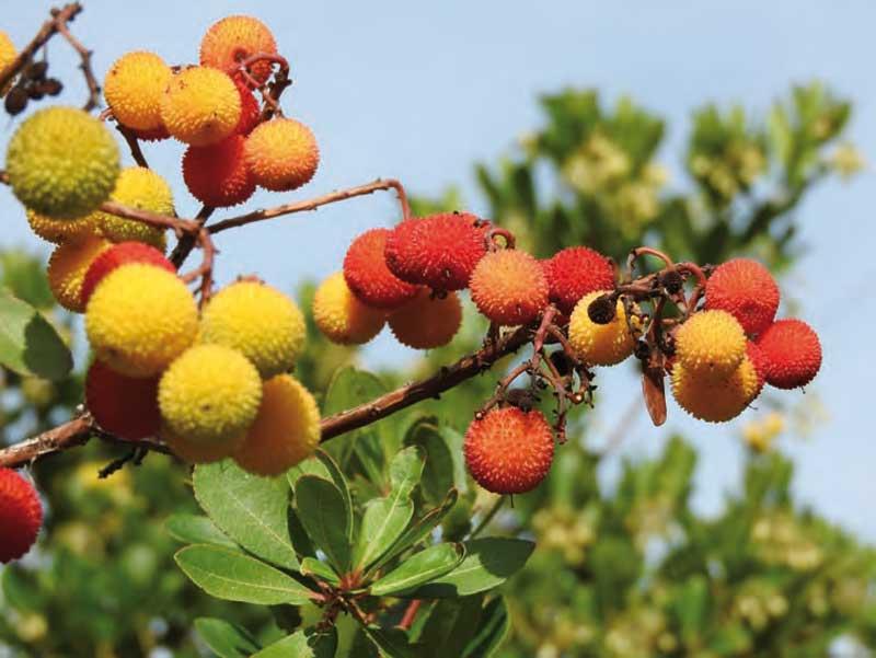 el-oso-pardo-frutas