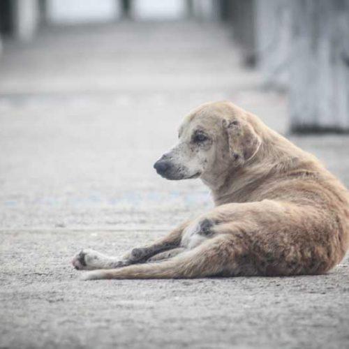 El 87% de los perros abandonados no son de caza