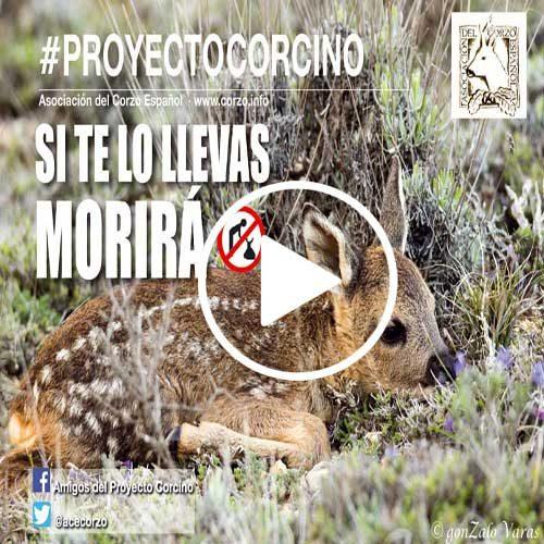 Proyecto Corcino 2018