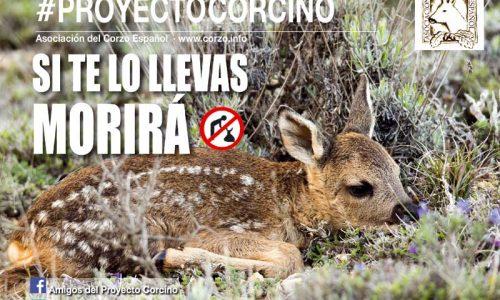 La asociación del corzo español presenta su campaña proyecto corcino 2018
