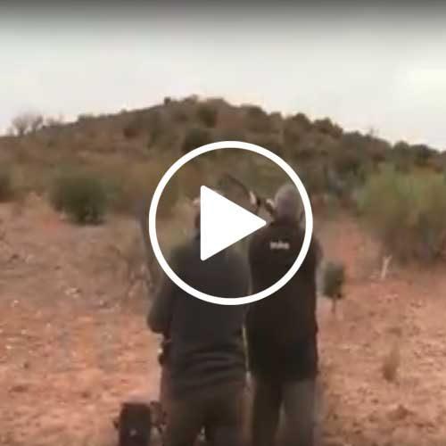 Ojeo de perdices Trofeo Caza – Cacerías Campos de Montiel