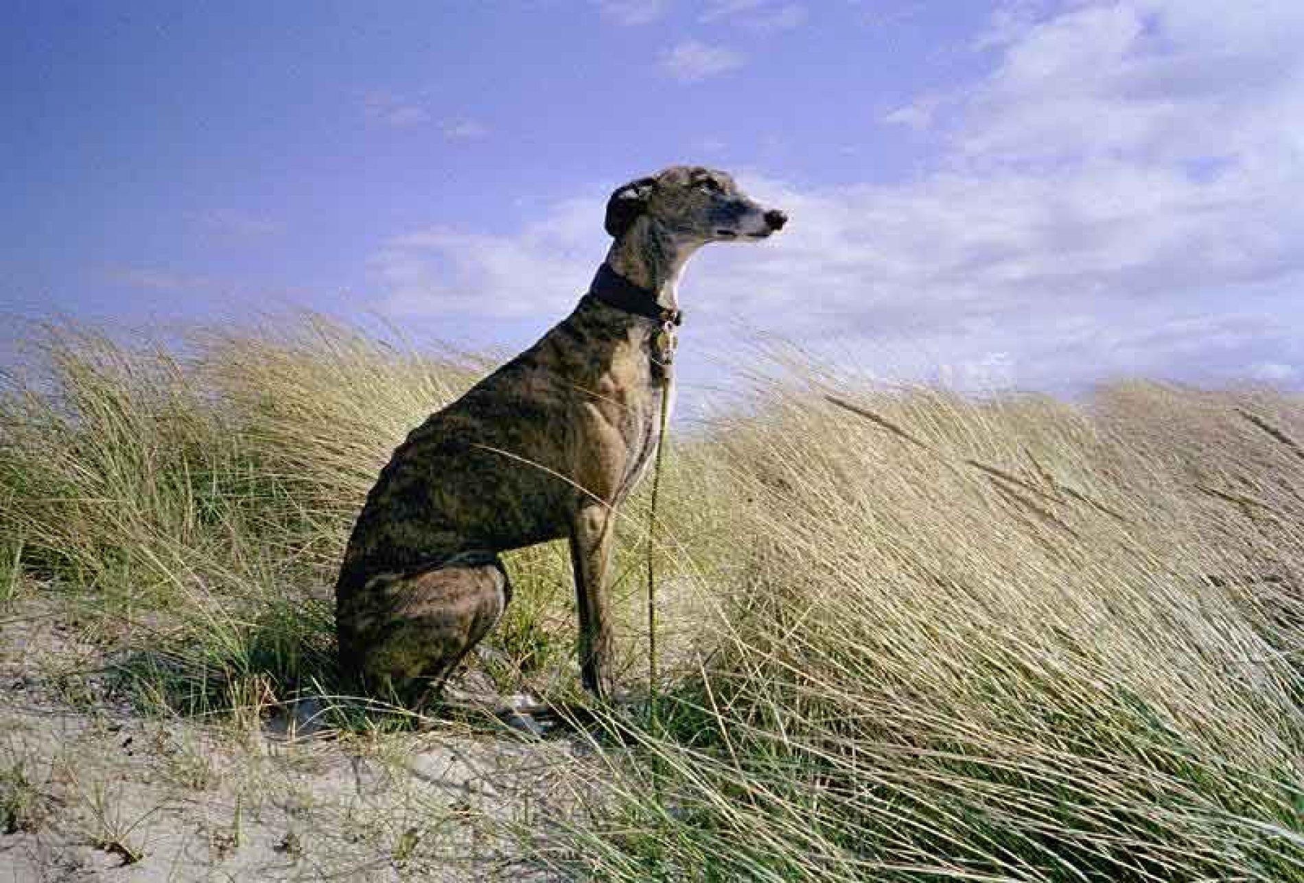 ¿No devolver a su legítimo dueño un perro perdido es un hecho punible?