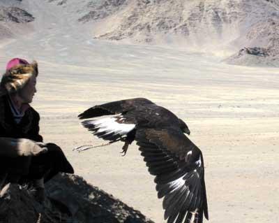 cetreria-caza-aguilas-reales-aguila-volando