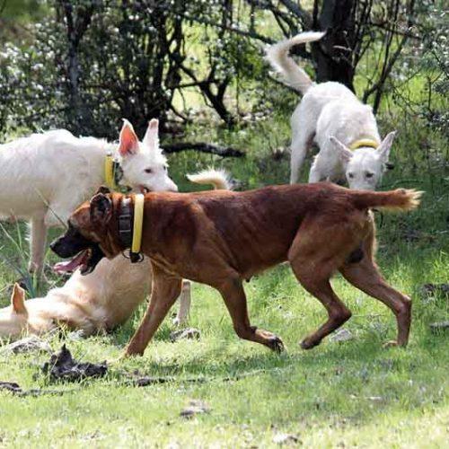 Efectos del Convenido Europeo de Protección de Animales