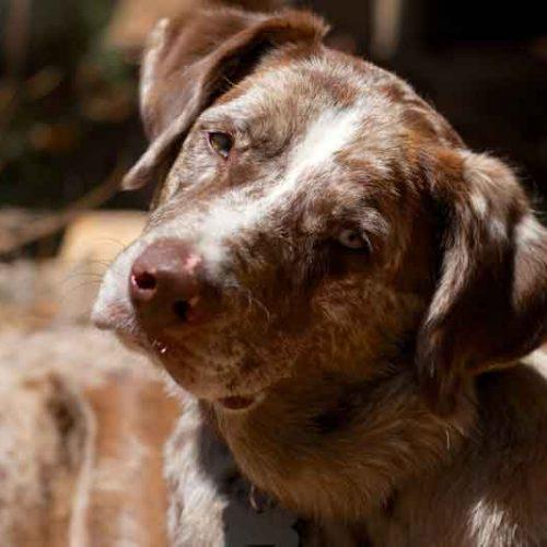 Ejercicios de estimulación para los primeros meses de un perro de caza