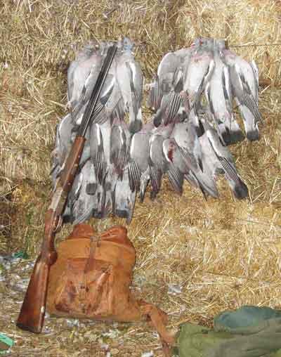 malpartida-palomas-desp