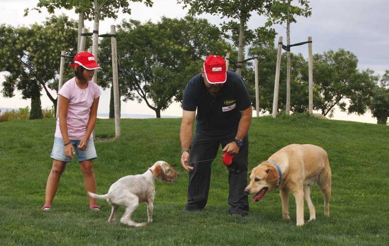 pasos-sociabiizacion-otros-perros