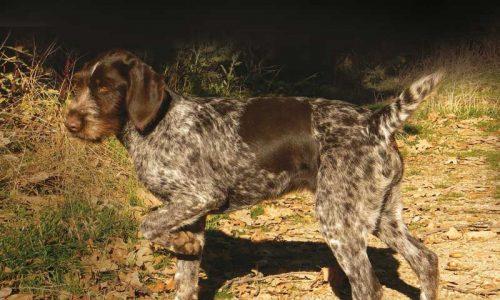 5 pasos para una buena sociabilización del perro de caza