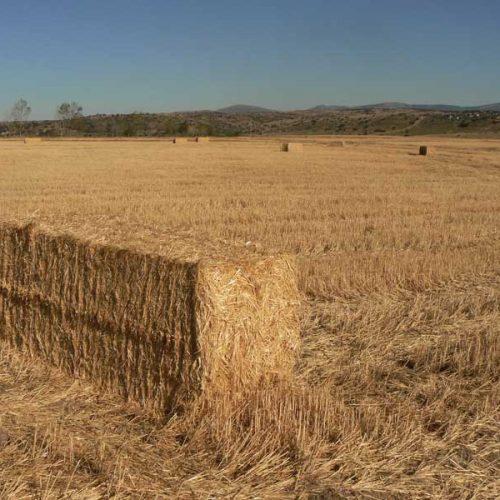 Retos para una buena química entre caza y agricultura