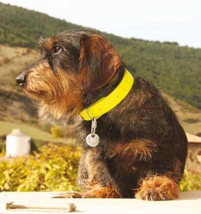 Qu tipo de collar comprar para un perro de caza - Pienso para perros de caza ...