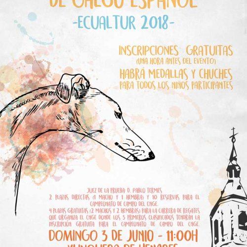 I Concurso Morfológico de Galgo Español en Ecualtur