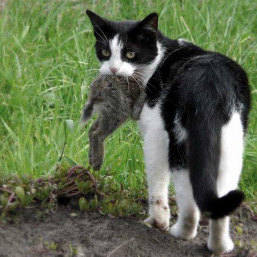Cuestiones jurídicas sobre el control de gatos asilvestrados