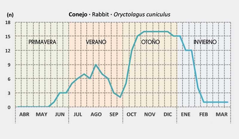 conejos-fenologia-grafico