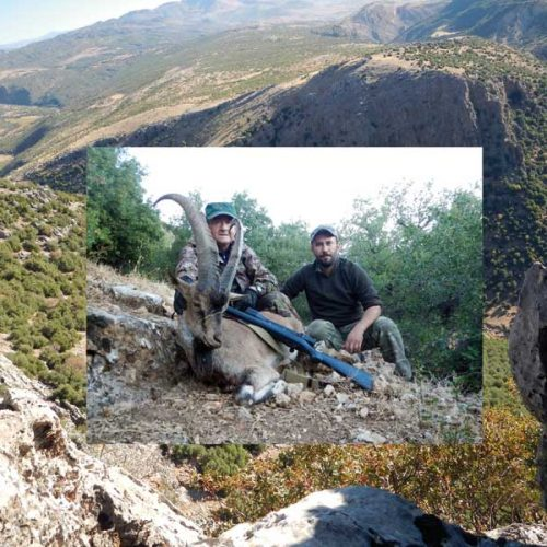 Cacería del íbice, Hybrid Bezoar en Turquía