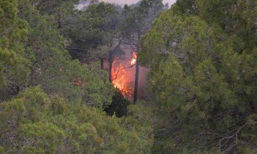 ¿Qué hacer con los bosques tras los incendios?