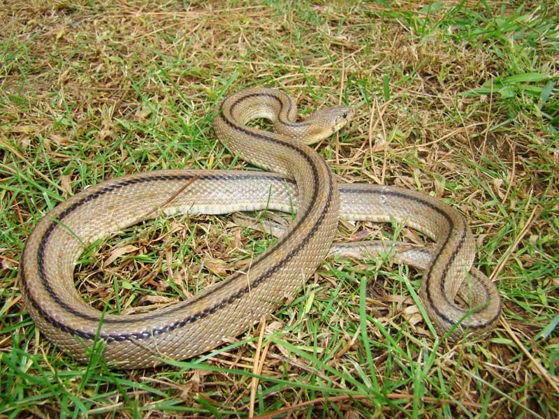 Serpientes-culebre-de-escalera-