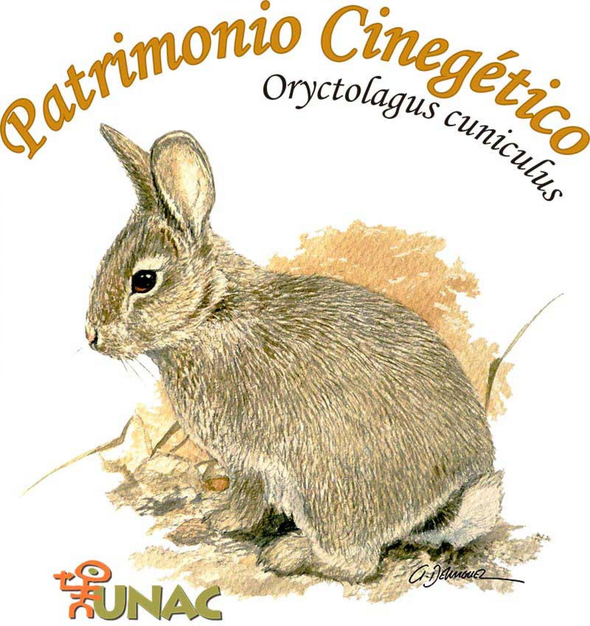 El conejo nuevo protagonista del Patrimonio Cinegético de la UNAC
