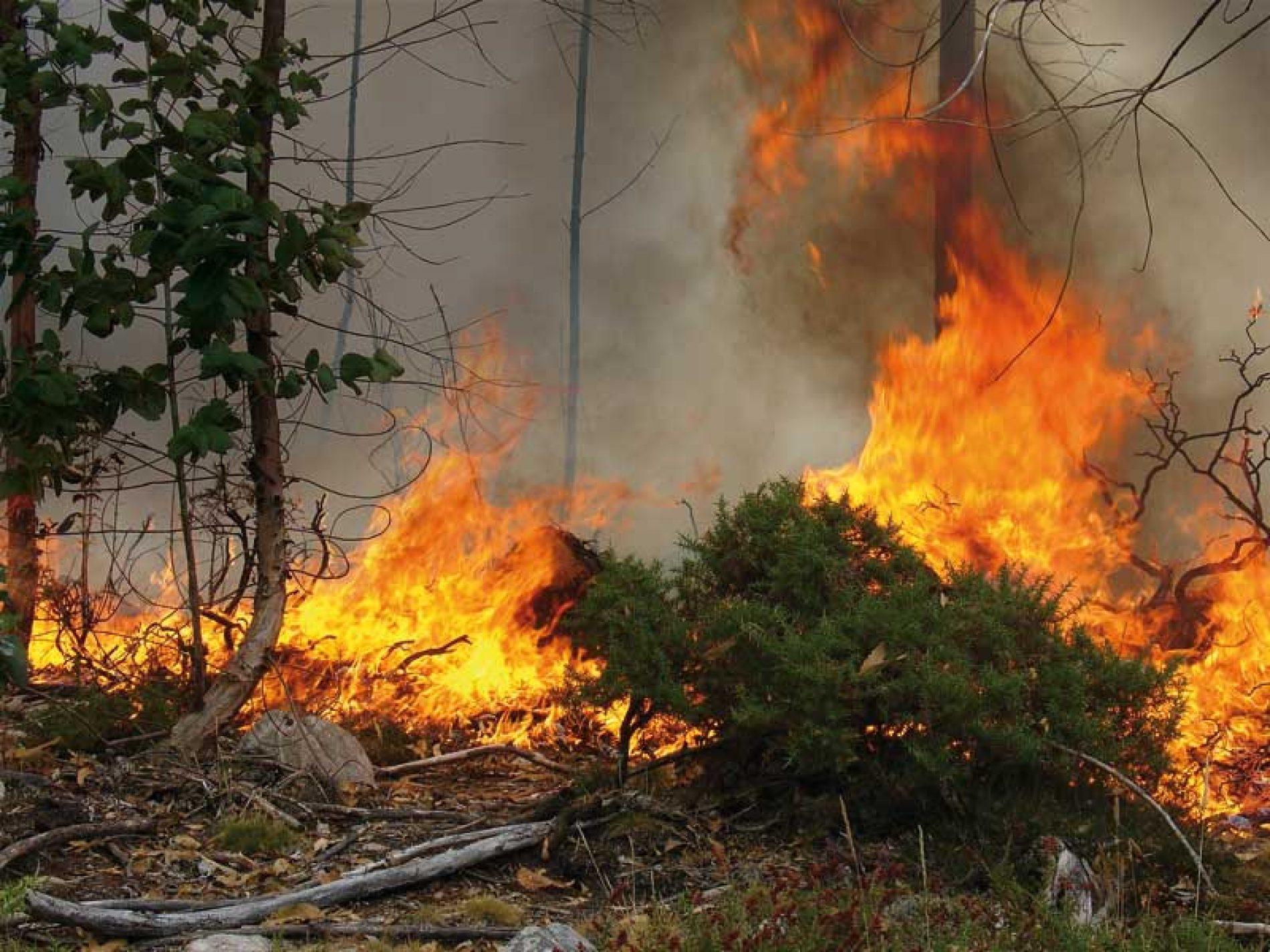 11 Infraestructuras, para tu coto, con las que evitarás los incendios