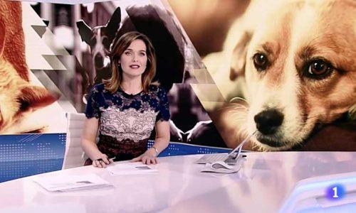 """La RFEC exige a RTVE que rectifique que los perros de caza """"son los más abandonados"""""""