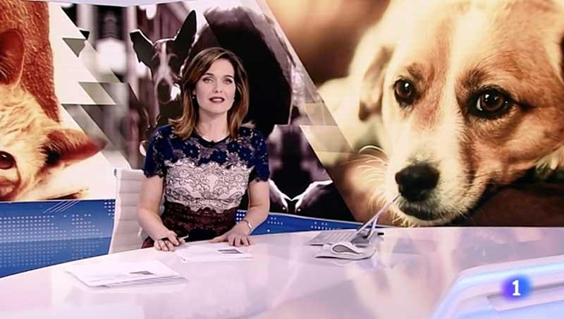 perros-telediario