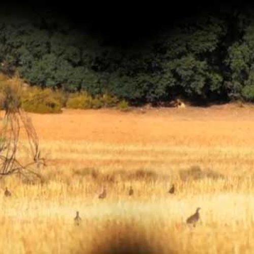 Artemisan lanza la segunda fase del primer conteo nacional de perdiz roja