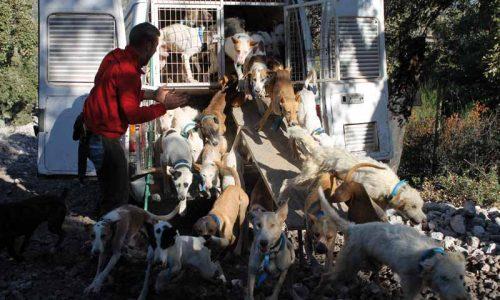 Los puntos más conflictivos de las nuevas leyes de protección animal.