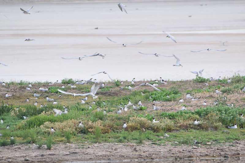 Paseo-Ortinologico-cadiz-charranes