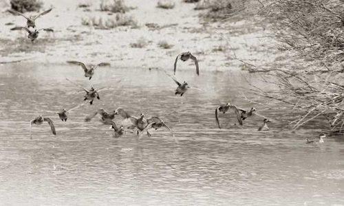 Jornadas de observación de aves en la provincia de Cádiz