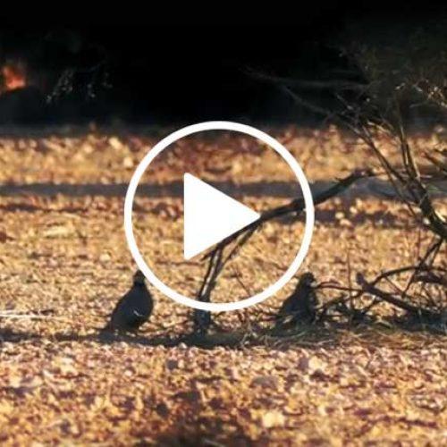 Conteo de perdices finales de verano / otoño- Proyecto Rufa