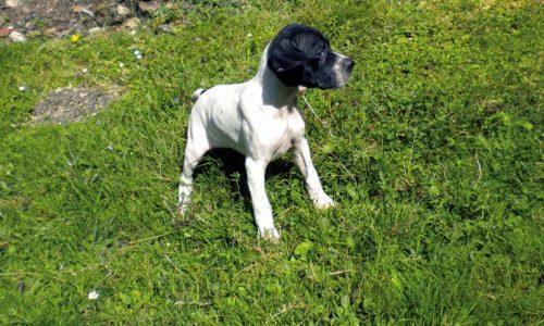 4 Consejos para el crecimiento positivo de nuestros cachorros en la caza