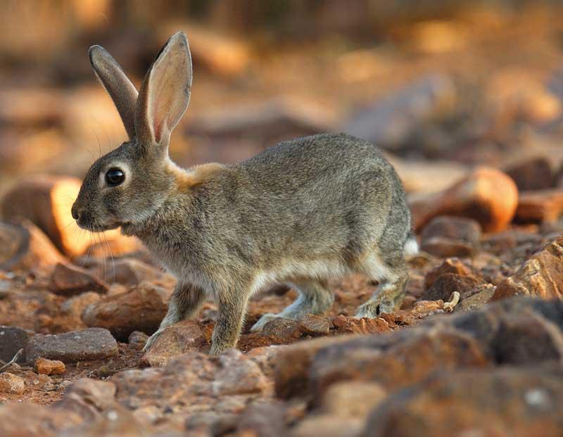 conejo-danos-prin-2