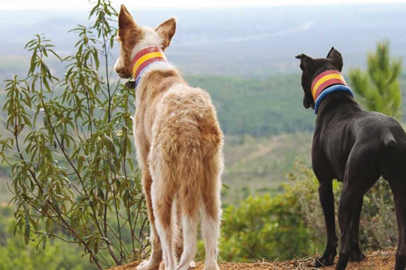 decalogo-monteria-perros-g