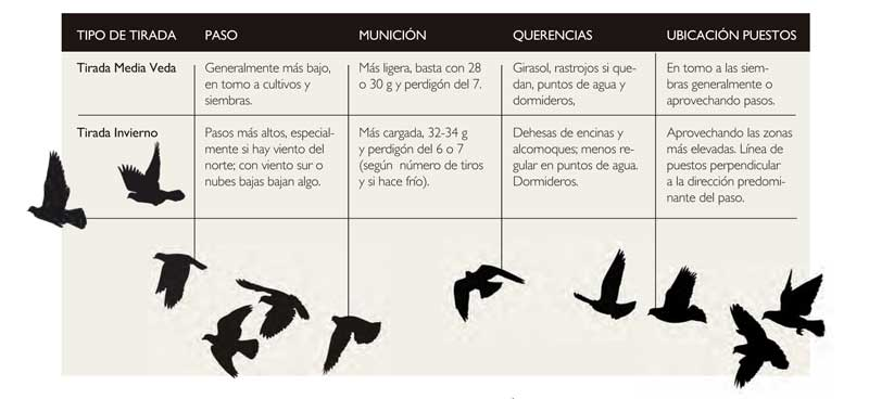 paloma-torcaz-cuadro-tirada
