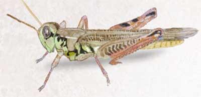 pesticidas-y-perdiz-insectos