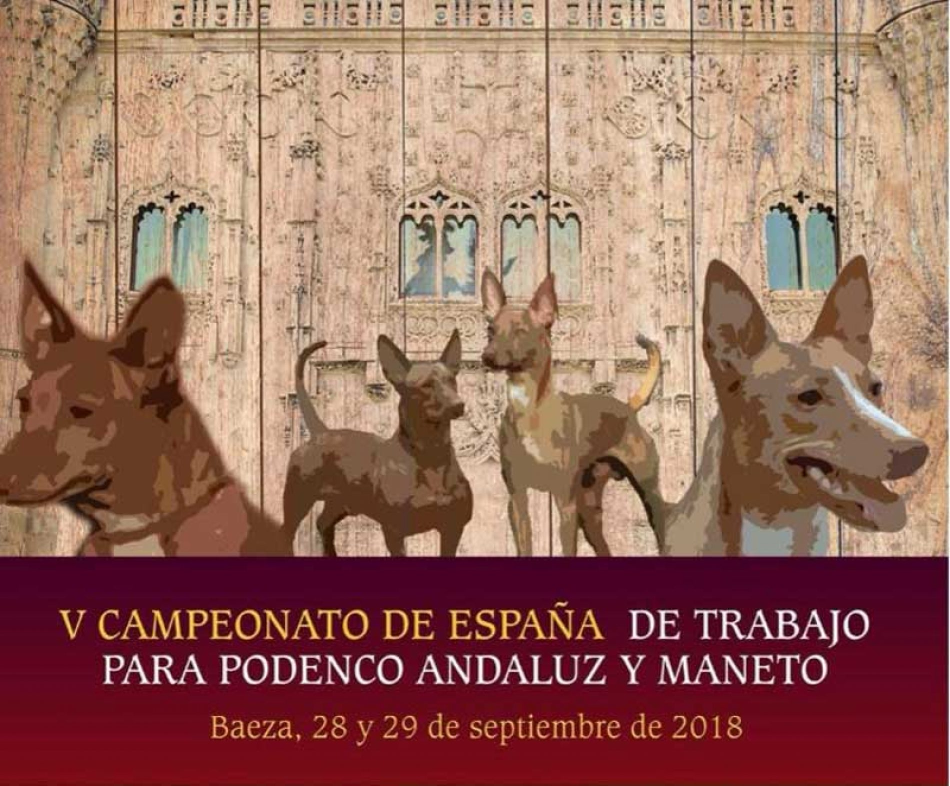 V Campeonato de España de Trabajo para Podenco Andaluz y Maneto
