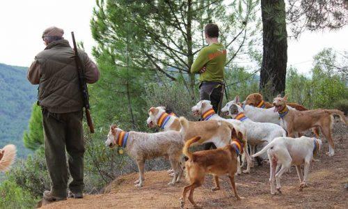 La Asociación Española de Rehalas se une a la decisión de no cazar en Soria