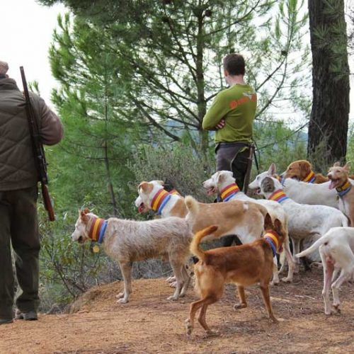 ARRECAL critica la carta «sectaria y demagoga» de un grupo de eurodiputados en contra de la caza