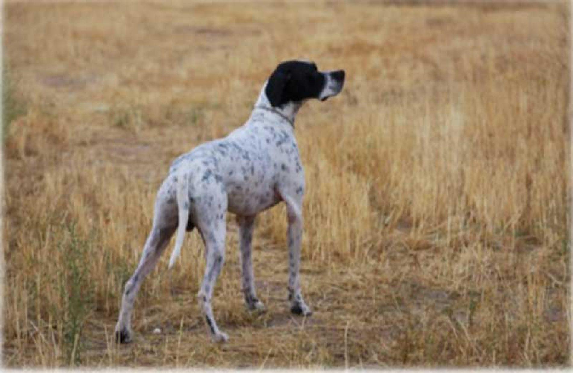 XXVII Campeonato de España de Caza Práctica – Perro de Muestra