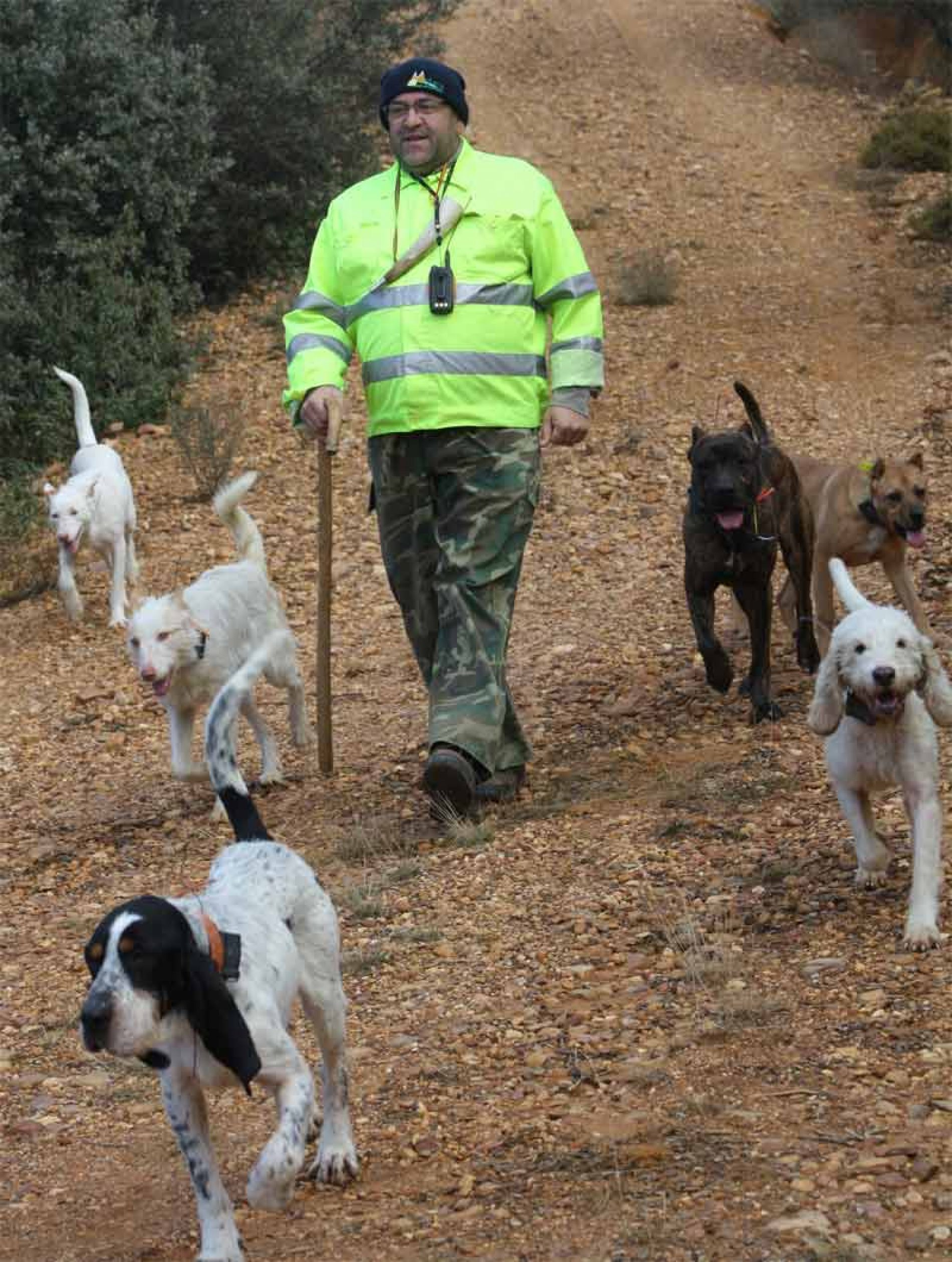 Minimización de la norma de desparasitación de perros sobre el sector cinegético