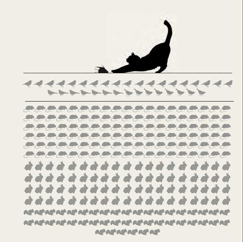 Gatos-asilvestrados-especies-predan
