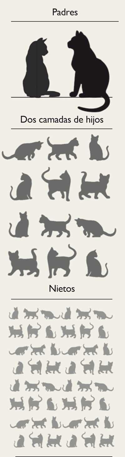 Gatos-asilvestrados-prole