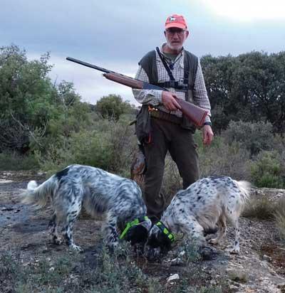 Setter-Ingles-isabelino-cazando