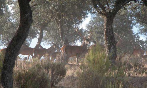 ¿Por qué los propietarios optan por la gestión de la caza mayor en sus fincas?