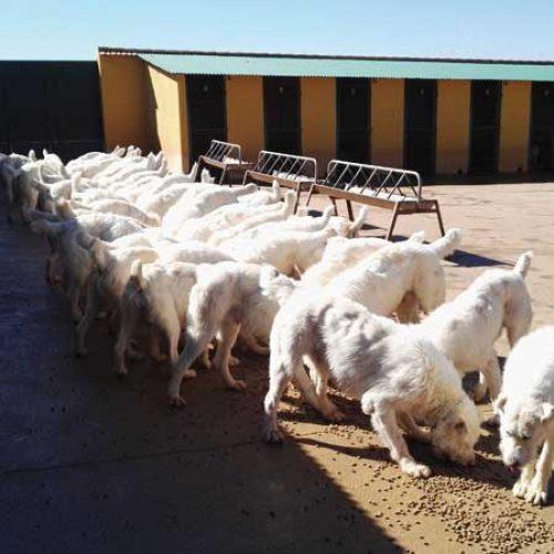 Desplazamientos a las perreras. Instrucciones interpretativas, según SEPRONA de La Rioja
