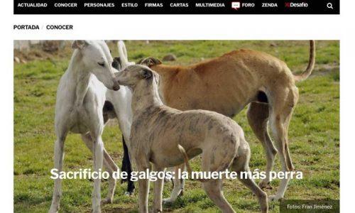 Nuevo ataque de los medios acusando a los cazadores de maltratar galgos