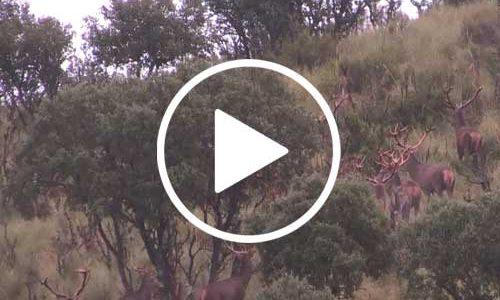 Vídeo Montería en el Encinar de San Martín