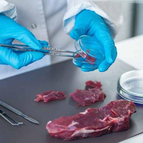 Un estudio científico confirma las propiedades saludables de la carne de ciervo